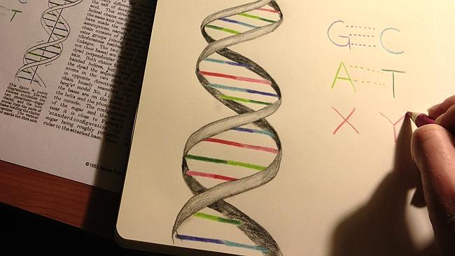 X eta Y, bi hizki gehiago genomaren alfabetorako