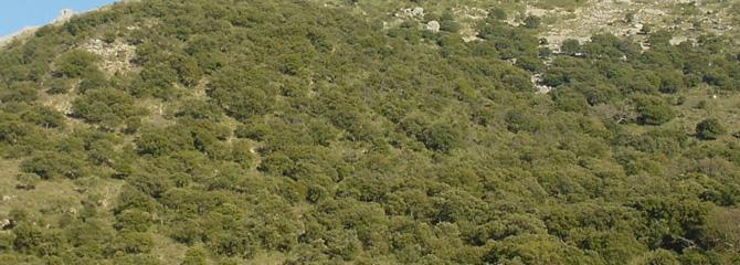 Baso hostoiraunkor mediterraneoak