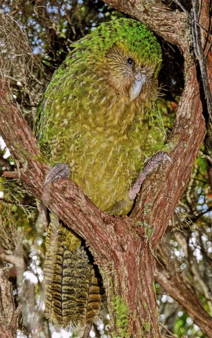 Milford Sound, Zeelanda Berriko altxorra