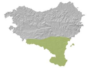Rhinechis scalaris