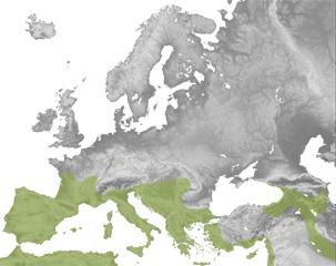 Rhinolophus euryale