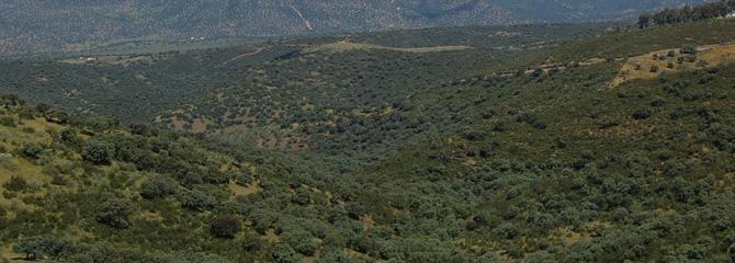 Sastrakadi mediterraneoak