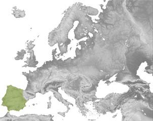Talpa occidentalis